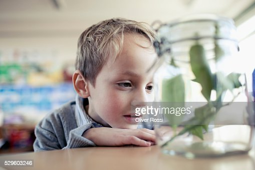 Young school boy (6-7) looking at plant sample placed in jar : Stockfoto
