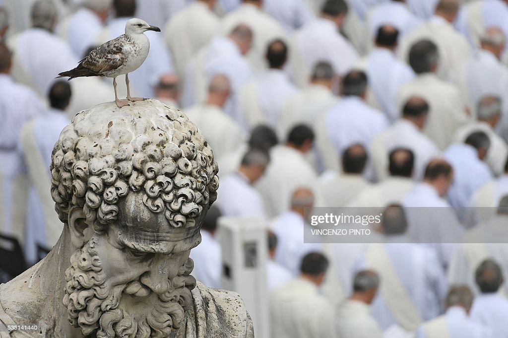 A young seagull stands on the top of a statue of St Peter during a holy mass on the occasion of the Jubilee of Deacons, on May 29, 2016 in Vatican. / AFP / VINCENZO