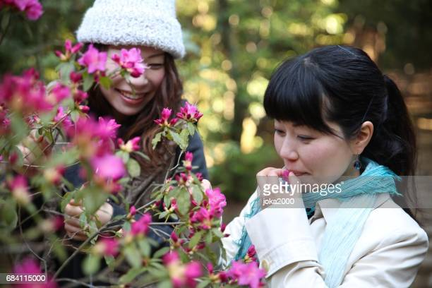 Young sisters tasting flower picture