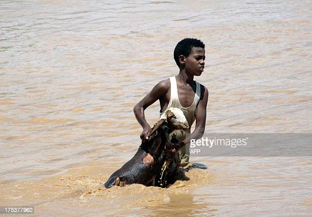 A young Sudanese boy holds a goat out of flood waters are he makes his way to higher land on August 3 in Khartoum Following heavy rains the past few...