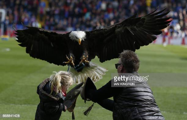A young supporter helps the Eagle handler with Crystal Palace's bald eagle mascot Kayla before kick off the English Premier League football match...