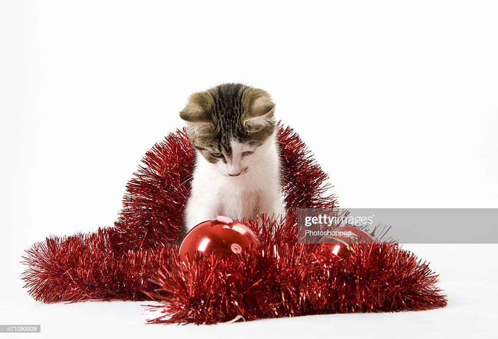 Young Tabby and white Kitten with Tinsel