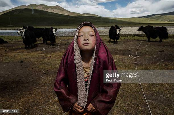 A young Tibetan Buddhist novice monk stands with his yak herd at the family's nomadic summer grazing area on July 24 2015 on the Tibetan Plateau in...