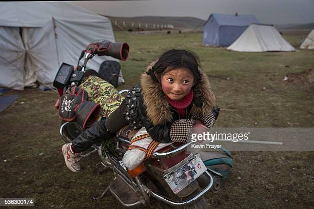 A young Tibetan nomad girl rests on a motorcycle at a temporary camp for picking cordycep fungus on May 22 2016 on the Tibetan Plateau near Sershul...