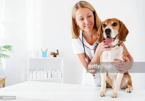 Jovem macho veterinário Abraçar bonito Cão Beagle