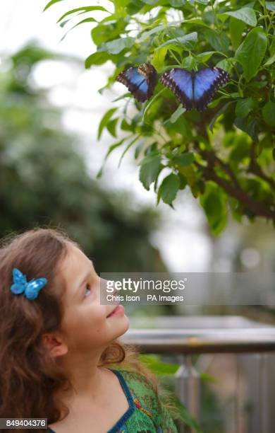 Young visitor Emma poses with butterflies in the glasshouse at RHS Wisley near Woking Surrey The butterflies will be at the world famous gardens for...