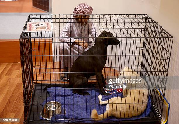 A young visitor looks at the stay dogs available during the Abu Dhabi International Hunting Equestrian Exhibition on September 11 2014 in Abu Dhabi...