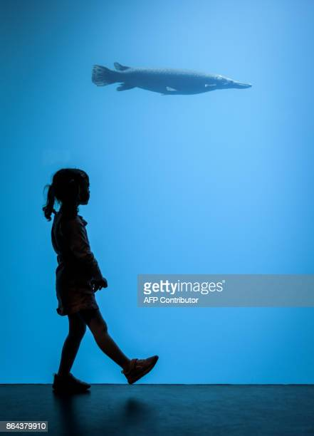 A young visitor walks next to an aquarium on the opening day of Aquatis the largest fresh water aquariumvivarium in Europe on October 21 2017 in...