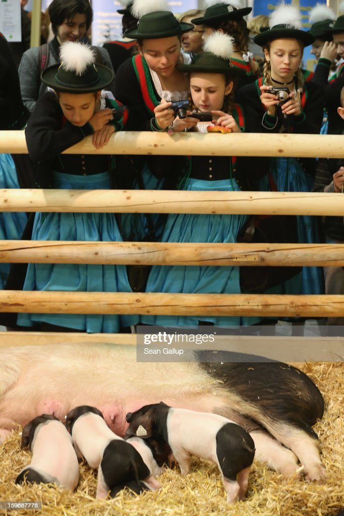 Young visitors dressed in Bavarian regional dress from the Chiemsee region photograph suckling piglets at the 2013 Gruene Woche agricultural trade fair on January 18, 2013 in Berlin, Germany. The Gruene Woche, which is the world's largest agricultural trade fair, runs from January 18-27, and this year's partner country is Holland.