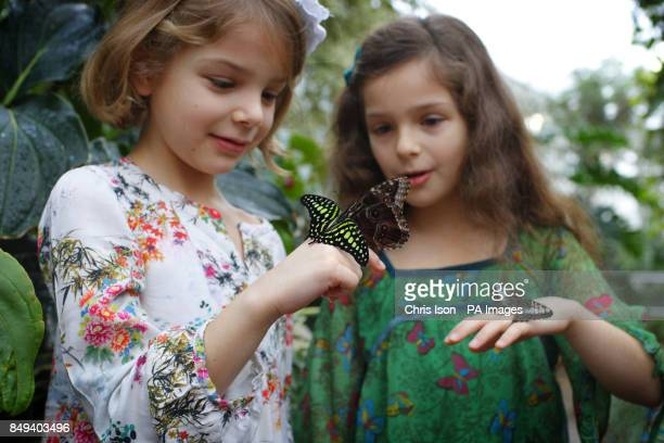 Young visitors Olivia and Emma pose with butterflies in the glasshouse at RHS Wisley near Woking Surrey The butterflies will be at the world famous...