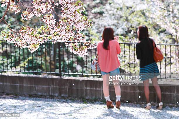 Young woman and cherry blossom