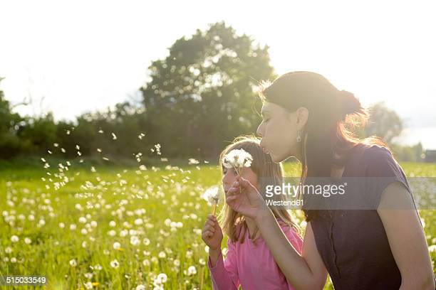 Young woman and little girl blowing blowballs on a meadow