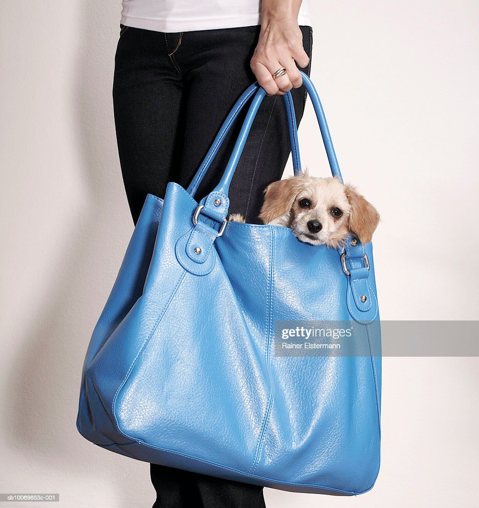 Young woman carrying Cain Terrier dog in handbag, mid section : Stock Photo