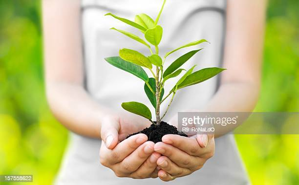 A young woman cradling a tree sprout