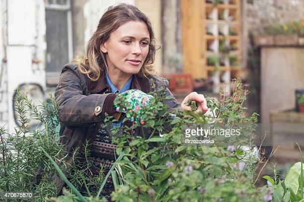 Jeune femme des herbes aromatiques dans un jardin urbain (Londres, Royaume-Uni)