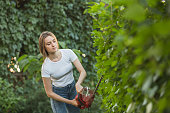Young woman cutting plants with hedge clipper at yard