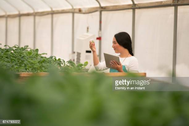 Young woman doing research in a biology lab