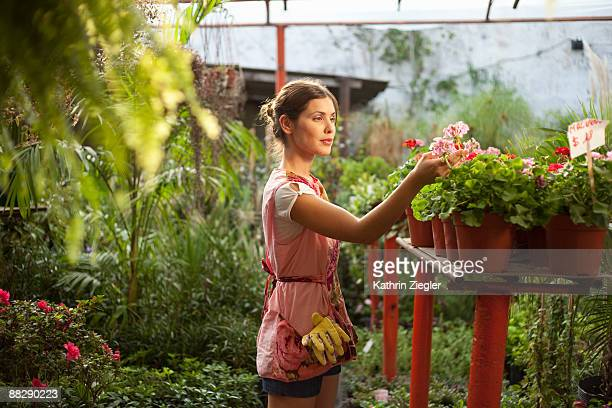 young woman examining flowers in green house