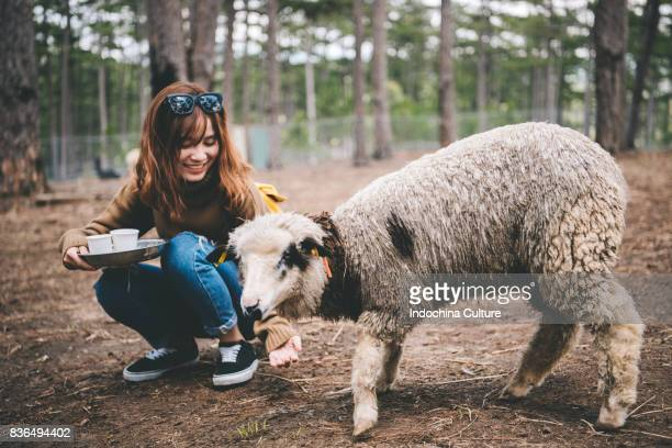 Young woman feeding a sheep