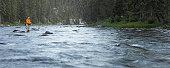 USA, Montana, Gallatin River, Cameron