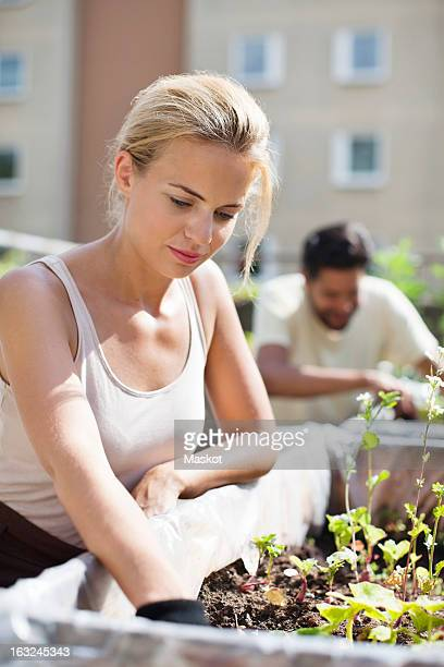 Young woman gardening at urban garden with man in the background