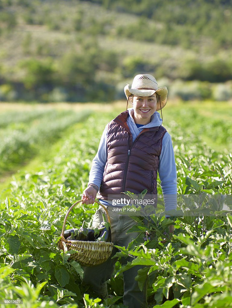 Young woman harvesting eggplants at small farm : Stock Photo