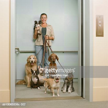 Young woman holding seven dogs in elevator, smiling : Stock Photo