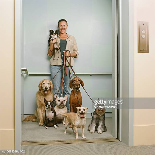 Young woman holding seven dogs in elevator, smiling