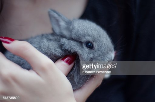 Young woman holding small bunny in his hands. : Stock Photo