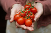 Young woman holding vine tomatoes, mid section, close-up of hands