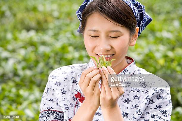 Young Woman in a Tea Field Smelling Fresh Tea Leaves