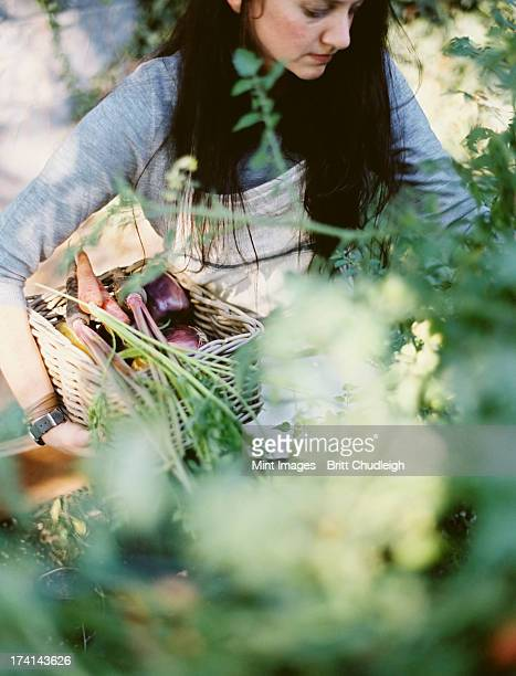A young woman in a work apron, holding a basket of freshly harvested organic vegetables. Outdoors in a vegetable garden.