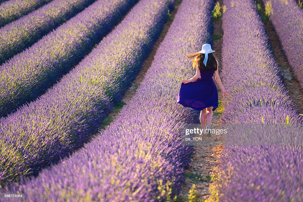 Young woman in the lavander field : Stock Photo
