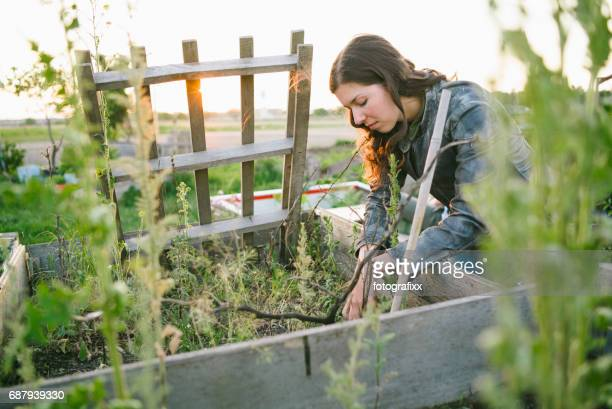 Young woman in urban gardening project at raised bed