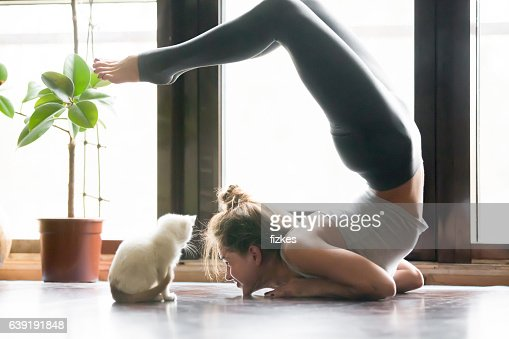 Young woman in variation of vrischikasana pose, home, cat near : Stock Photo