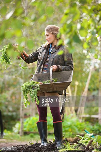 young woman in vegetable garden holding wooden trug containing carrots