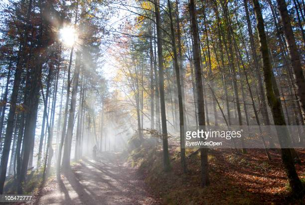 A young woman on a mountain bike trip uphill to the mountain Herzogstand on October 12 2010 in Walchensee Germany