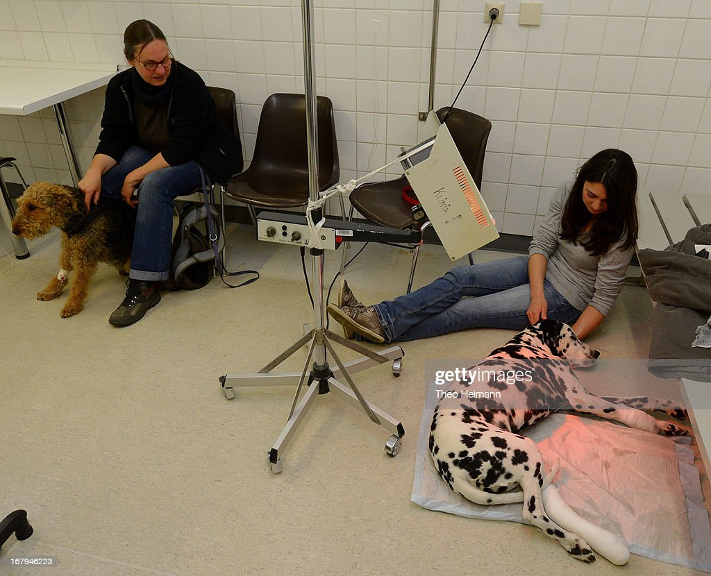 A young woman (R) oversees her dalmatian following surgers on its leg as another pet owner with a mixed terrier waits to see a veterinarian in the waiting room at the Dueppel animal clinic on April 29, 2013 in Berlin, Germany. The Dueppel clinic consists of two separate facilities, one for horses and other large animals, the second for small animals. The Dueppel clinic belongs to the Freie Universitaet Berlin university and is one of five university veterinary clinics in Germany. The clinic for small animals is now the most modern in Germany.