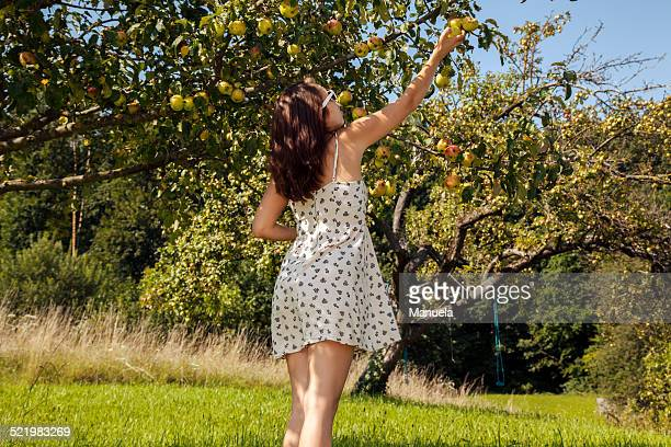 Young woman picking apple form tree