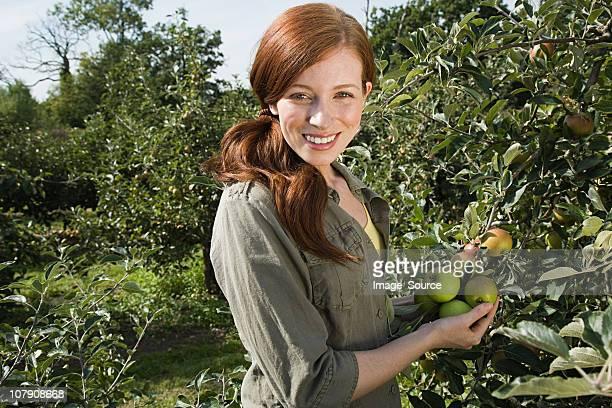Junge Frau frische Äpfel pflücken