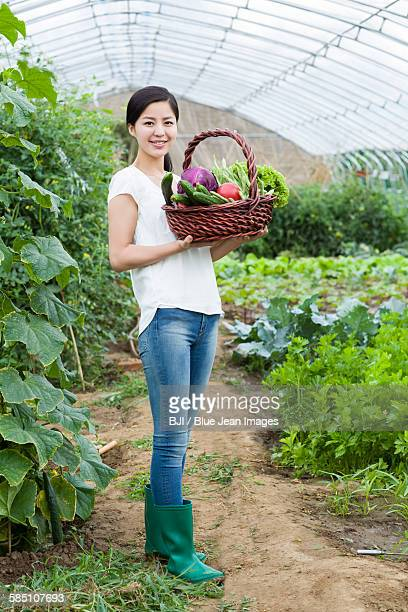 Young woman picking vegetables in greenhouse