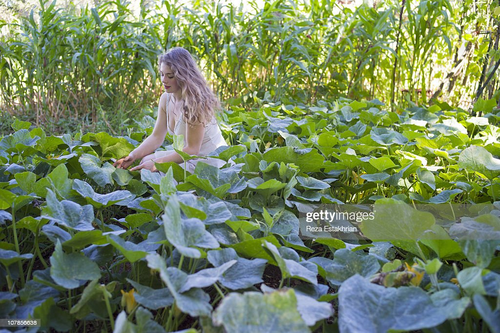 Young woman picks zucchinis : Stock Photo