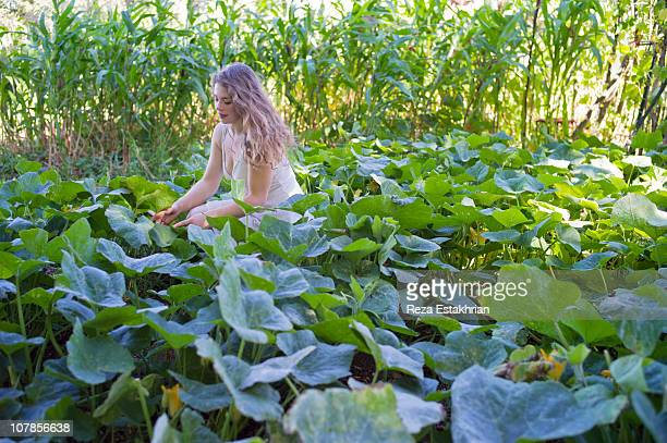 Young woman picks zucchinis