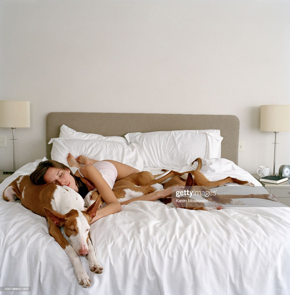 Young woman sleeping with three Ibizan hounds on bed : Stock Photo