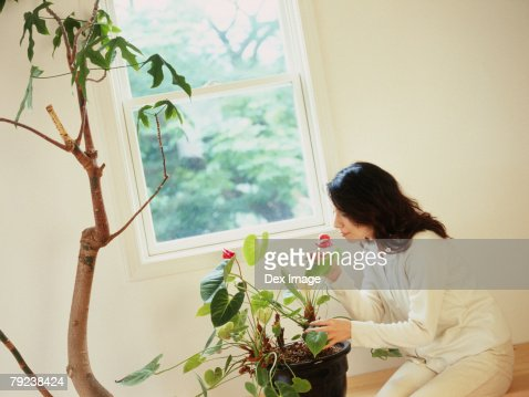 Young woman smelling flowers : Stock Photo