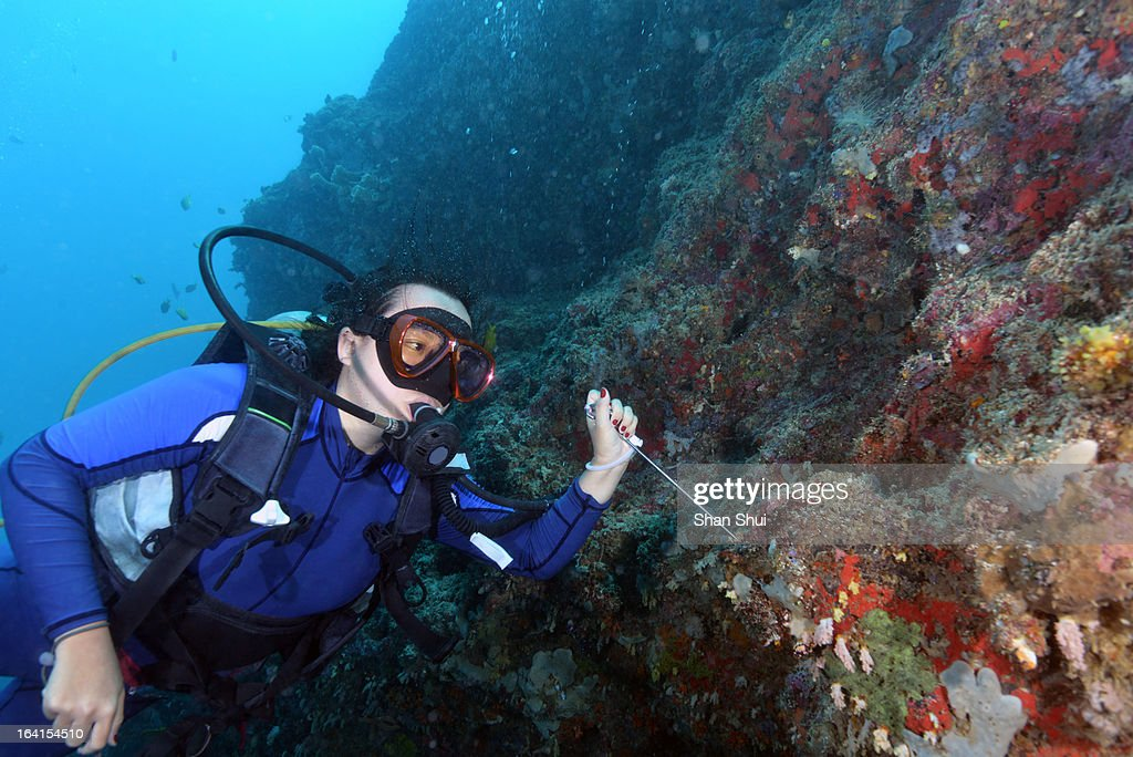 Young woman snorkeling : Stock Photo