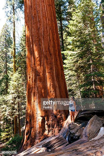 sequoia national park cougar women Hiker hears loud scream in sequoia national park i was camping in the backcountry of sequoia national park a woman screaming and a dinosaur roaring all.