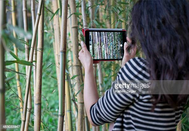 young woman taking picture of bamboo grove