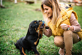Young woman training and playing with puppy on grass, in park. Rottweiler dog puppy details