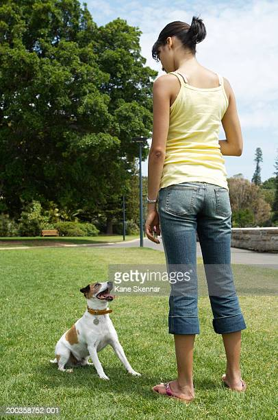 Young woman training jack russell terrier in park, rear view